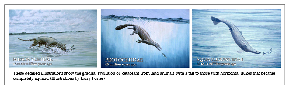 EVOLUTION ILLUSTRATIONS-NEW