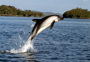Peales Dolphin1