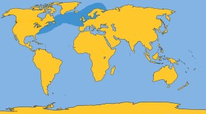 Atlantic White-sided Dolphin Distribution2
