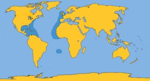 Gervais Beaked WHale Map